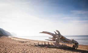 Daeny's Dragon Ancestors Wash Up on Beach in England