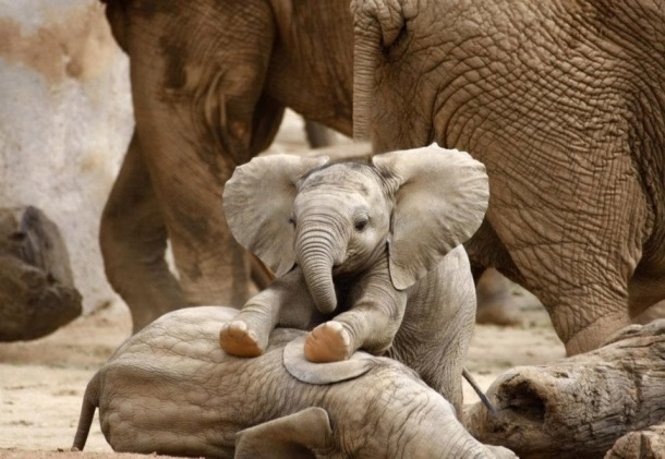 Because I feel like we could all use a baby elephant photo right now.